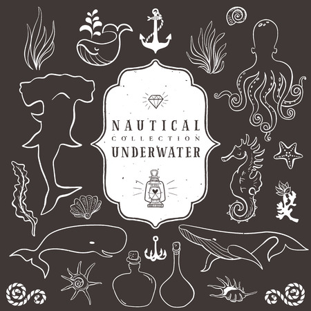 Sea life, marine animals. Vintage hand drawn elements in nautical style.