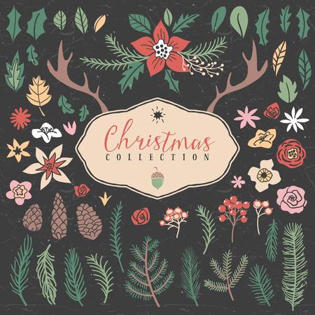 pinoli: Elementi vegetali decorativi. Natale insieme. Disegnata a mano illustrazione. Elementi di design.