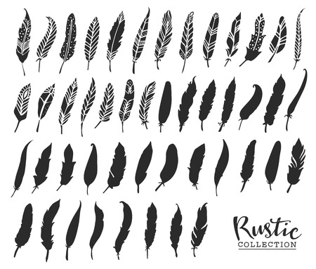 feather: Hand drawn vintage feathers. Rustic decorative vector design elements. Illustration