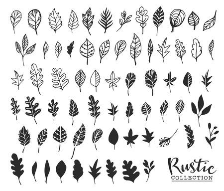 pflanzen: Hand gezeichnet vintage Blätter. Rustic dekorative Vektor-Design-Elemente.