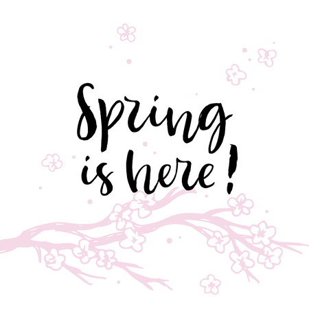 Spring is here. Pink Cherry blossom Sakura branch. Calligraphy card. Hand drawn design elements. Handwritten modern brush lettering. Vector illustration.