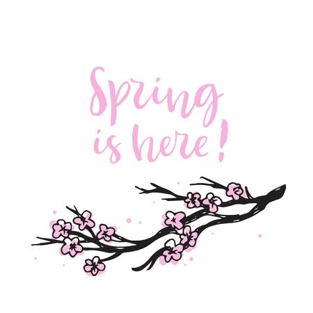 Spring is here. Cherry blossom branch. Pink blooming Sakura. Calligraphy card. Hand drawn design elements. Handwritten modern brush lettering. Vector illustration.
