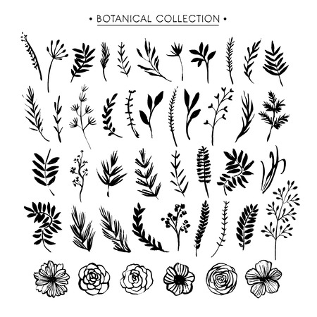 Botanical collection. Flowers, branches, and leaves. Hand drawn design elements. Nature vector illustration.