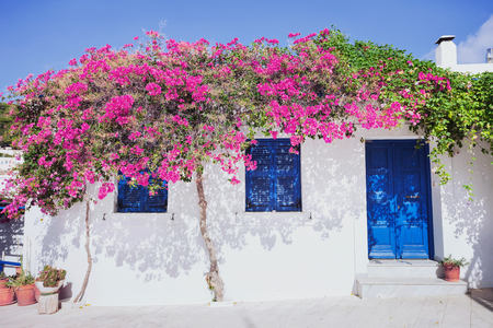 Traditional greek house with flowers in Paros island, Greece. Blue door and blue window surrounded by magenta flowers Stock Photo