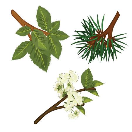 Three Branches: Pine, Alder, Apple Tree Vector