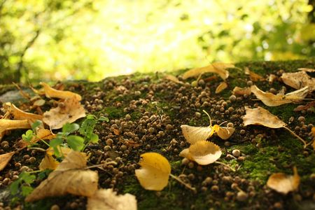 Autumn Gold Leaves on Old Overgrown Stone Stock Photo - 5347528