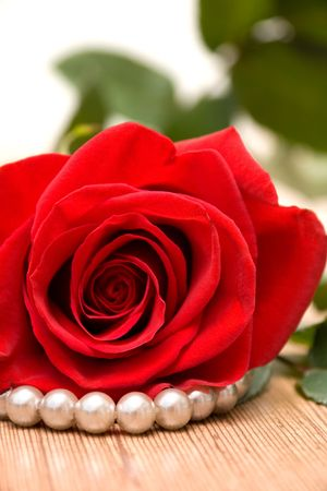 perls: Red Rose and Perls on Wooden Table