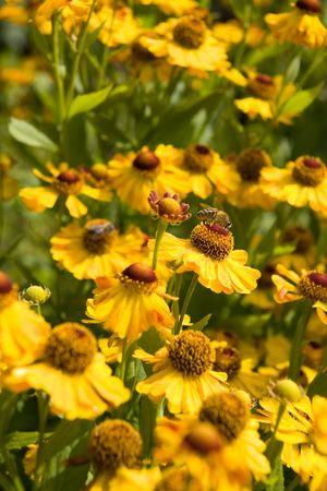 beautifull: Yellow Flowers on Sunny Meadow Stock Photo