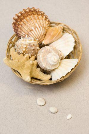spliced: Seashells in basket