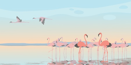 flock of birds: Group of pink flamingos on the bay Illustration