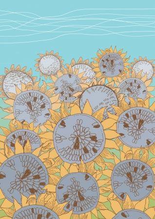 Yellow field of sunflowers Stock Vector - 13842897