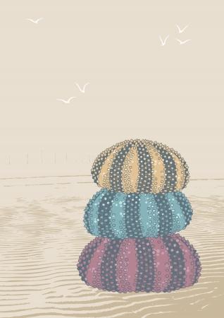 sea urchin: Pile of three sea urchins