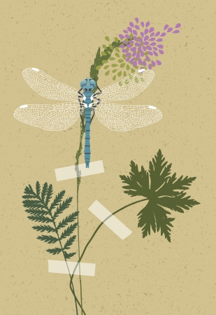 herbarium: Illustration of yellow dragonfly in the herbarium Illustration