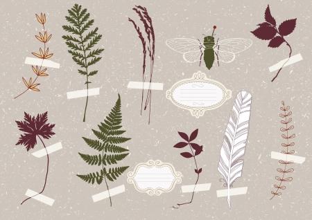 cicada: Illustration of green beetle in the herbarium