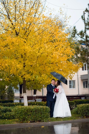 newly married couple: Newly married couple posing in autumn park