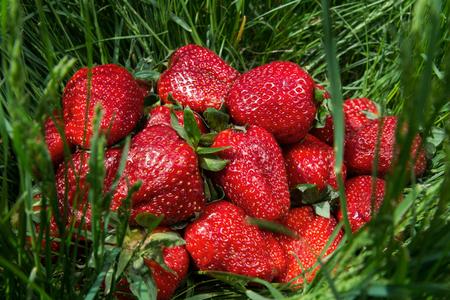 Ripe strawberry on green grass