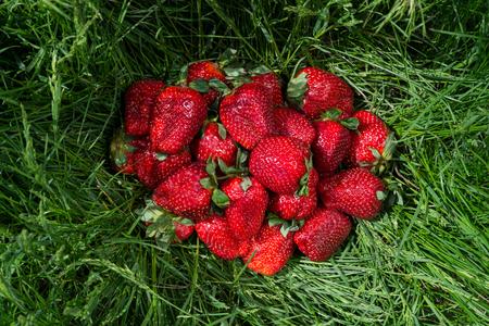 Big strawberries on grass