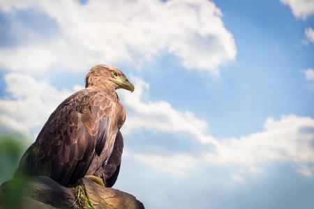 Eagle sitting on rock
