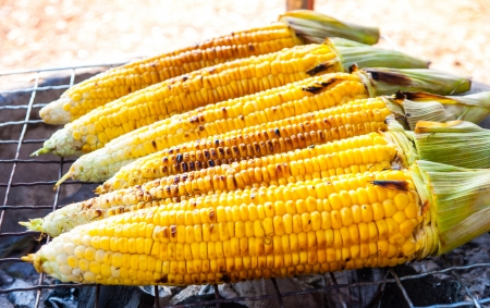 A Close-up fresh corn,Bakground photo