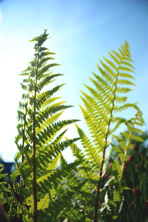 forest fern leading into a clear blue sky
