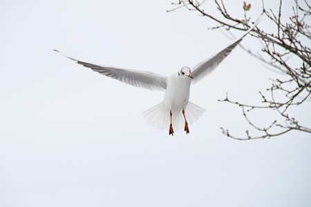 a single seagull looking around for food photo