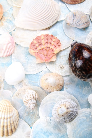 compiled: really bright and blue scene of shells compiled together Stock Photo