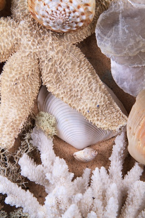 fish star: Grupo de la vida del mar muerto compilado en una escena. contiene varias granadas de diferentes y un pez estrella