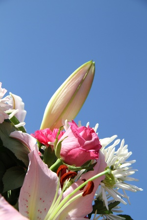 beautiful summers flowers against a really lovely sea blue background. photo