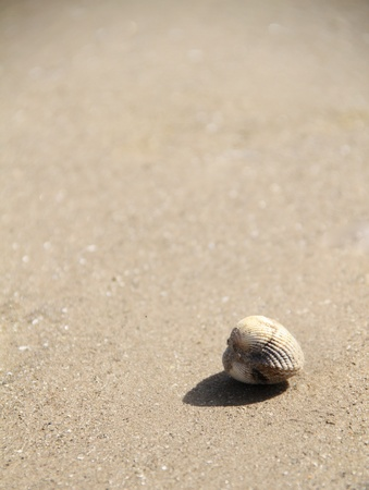 a single sea shell left alone on the beach shows peacefulness and tranqility. Image also has lots of copy space.