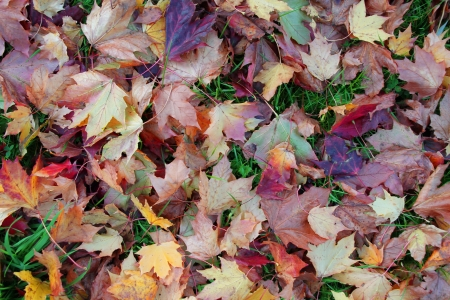 A background texture full of autumn leaves on grass Stock Photo - 17289522