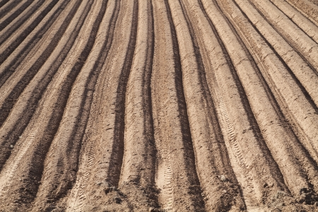 an image of a ploughed field in straight lines in the spring time ready for crop sewing