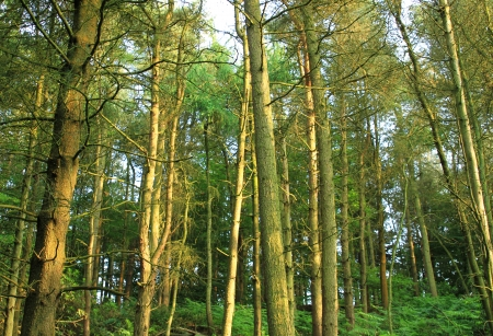 Trees in the woods in the British summer time with fern growing around the tree trunks   Stock Photo