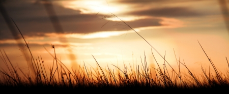 shot of silhouetted grass through a golden sunset  with glorious clouds in the sky