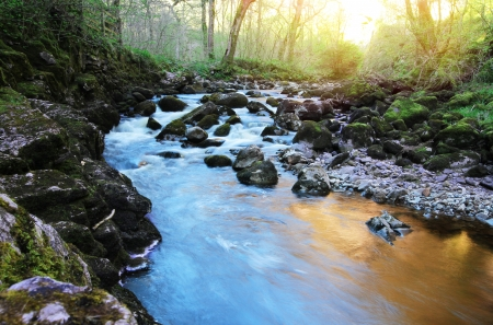 colourful river running through a forest at sunset