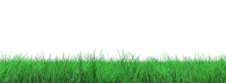 3d green grass floor on white for easy cutting out