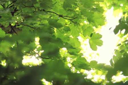 bright green summer leaves on a tree in day light Stock Photo
