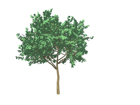 a 3d design tree with green leaves against a white background.
