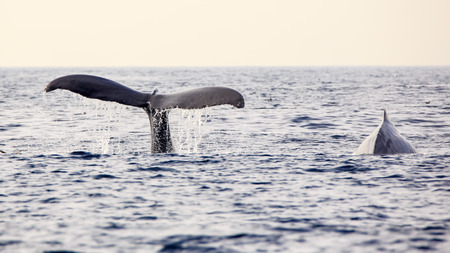 whale watching in Los Angeles