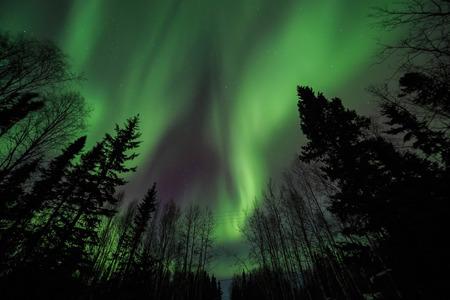 Aurora, night sky at alaska, fairbanks 스톡 콘텐츠