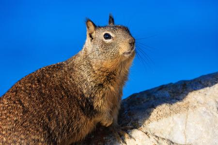 17: Squirrel at the beautiful 17 mile coastline