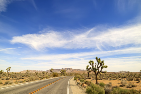 joshua: Landscape in Joshua Tree National Park, morning