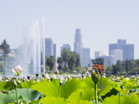 echo: Echo Lake and Los Angeles downtown cityscape, daytime