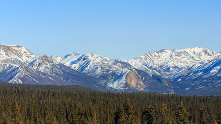 denali: White mountain and trees at Denali National Park and Preserve