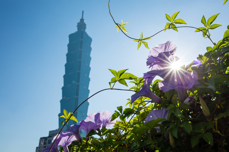 A purple morning-gloryat backlight with the famous 101 at Taipei, Taiwan