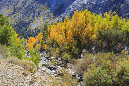lee vining: Beautiful fall color in Tioga Road, California