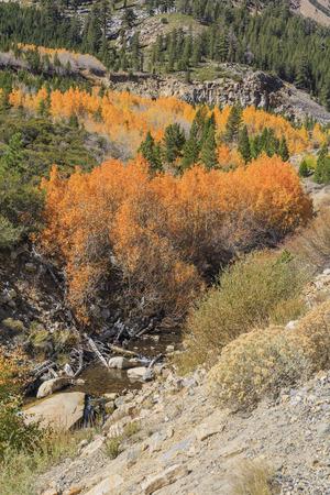 color in: Hermoso color de la ca�da en el camino de Tioga, California Foto de archivo