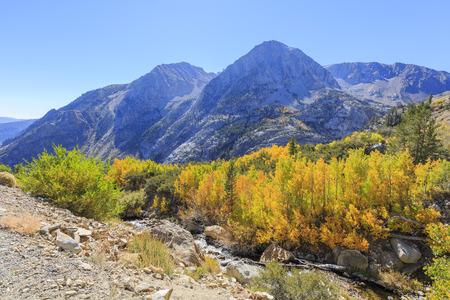 Beautiful fall color in Tioga Road, California