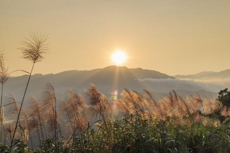 Zon rise landschap met Miscanthus aan de voorzijde, New Taipei City, Taiwan