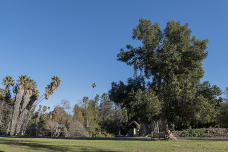 and arcadia: Beautiful park with trees, chair and grass field, California