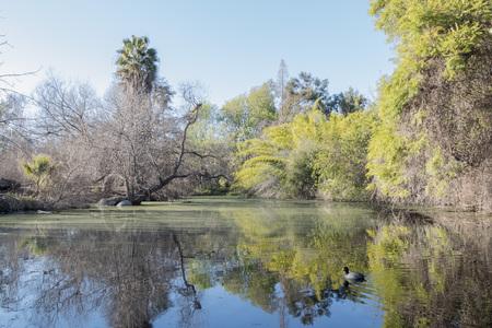 no body: Beautiful park with lake, tree and reflection, California Stock Photo